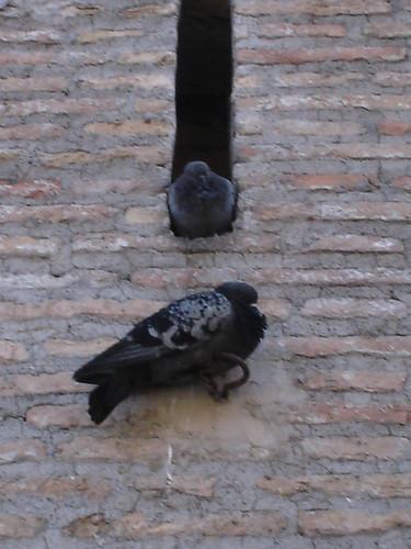 rome e giulietta