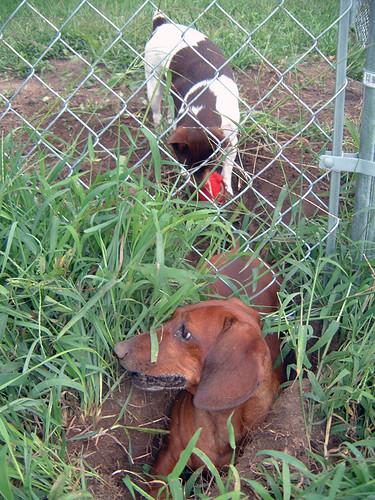 2006-09-02 - DogsOutside-0067
