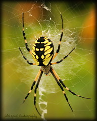 orb spinner (jaki good miller) Tags: spider web arachnid jakigood creature gardenspider insectsandspiders