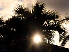 shine (Watari Goro ) Tags: morning light sun tree silhouette sunrise shine palm