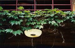 aoyama7 (gracias!) Tags: green film japan architecture tokyo pentax ivy aoyama omotesando mz5 表参道 dojunkaiapartment 同潤会青山アパート