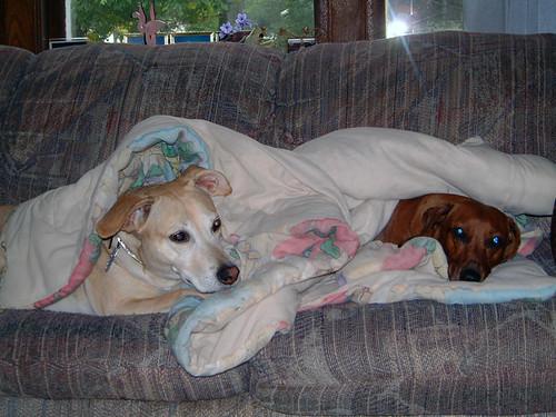 2002-10-18 - Shadow&Ralphie-028