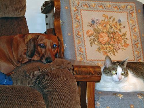 2002-10-31 - Ralphie&OzzyChair003