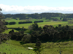 A Wairarapa Valley (Brenda Anderson) Tags: newzealand green geotagged scenery view sheep scenic hills valley wairarapa tekopi curiouskiwi utataview cavelandsrd geo:lat=41042074 geo:lon=175696621 brendaanderson curiouskiwi:posted=2006