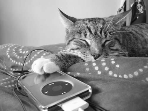 Cat pawing at iPod