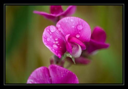 Beauty in The Rain