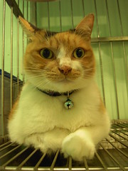 EPSN8064 (jacky elin) Tags: cats flower cat mix short