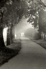Early morning walk (PeKai) Tags: blackwhite nikon 11 explore fp4 nikonf3 hunsrueck hunsrck id11 10525 pekai