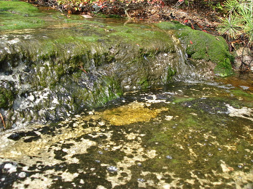 algae in the spring water