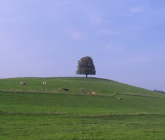 lonely tree (Heiko Brinkmann) Tags: tree green grass 1025fav 510fav germany landscape deutschland cows lonely