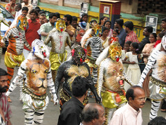 FINALY ONLY ONE STANDS OUT OF THE CROWD (Felix Francis) Tags: people india festival painting dance asia tiger culture kerala tigers ritual tradition ethnic onam thrissur paintedpeople pulikkalli dancingtigerpulikkalli
