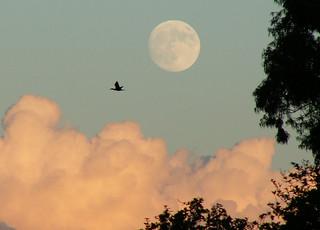 big moon rising, cormorant, cloud