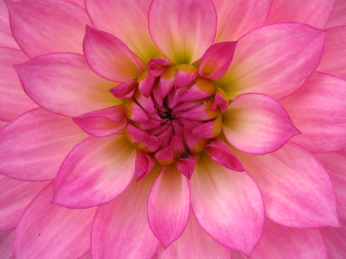 pink flower petals | Flickr - Photo Sharing!