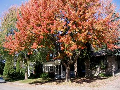 Our house in the fall (the one in the middle) (Robbie1) Tags: house fall montreal connaught
