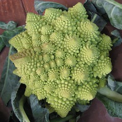 'ROMANESCO EARLY'