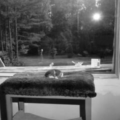 Mercury in the Window