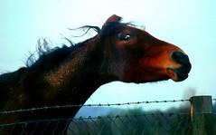 crazy-horse? (.finding.elsewhere.) Tags: kilkenny ireland horse irish eire ultramegaok