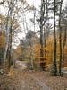 Last Look (Usonian) Tags: autumn october massachusetts newengland 2006 foliage driveway westernmass utatathursdaywalk28