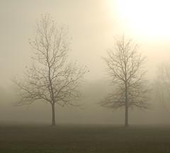 misty morning (John Kratz) Tags: morning trees mist misty fog newjersey foggy nj explore creativecommons dreamy kratz burlingtoncounty willingboro nikonstunninggallery johnkratz