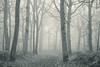 Ominous path (SASHA TURPIN) Tags: forest trees tranquility monochrome moody landscape mist fog niebla path bw blackandwhite nature morning mood light splittone 5d 24105mm canon