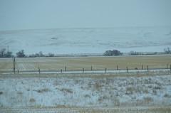Winter Hill Over Field (Bracus Triticum) Tags: winter hill over field アルバータ州 alberta canada カナダ 12月 december 2017 平成29年 じゅうにがつ 十二月 jūnigatsu 師走 shiwasu priestsrun