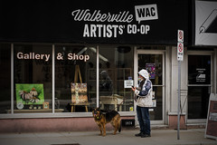Man And Dog. Windsor, ON. (Paul Thibodeau) Tags: photooftheday windsor nikond500 50mm streetphotography wyandotte man dog walkerville artistscoop