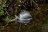 mirrored 2 (Steffi.K.) Tags: enz vögel schwan frühling feder hund spinne park bird swan spring spider dog feather