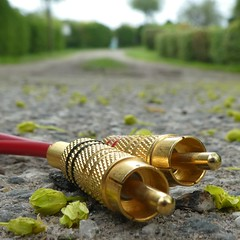 Hit the Road, Jack (cropped) (captain_joe) Tags: macromondays plugsandjacks road strasse strase weg lindenblüten kabel stecker cinchkabel