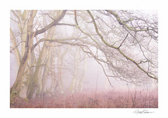 The Overhang (George-Edwards) Tags: landscape woodland forest nature wildlife trees ancient avenue track woods bracken ferns winter seasons light dawn morning branches mist fog sunrise atmosphere countryside rural berkshire england georgeedwards