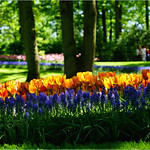 Spring Colors thumbnail