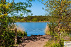 Frensham_DSC8964 (Nick Woods Photography) Tags: landscape frensham frenshamcommon frenshamponds nt nationaltrust greenery trees water waterscape waterreflections waterscene colour colourfullandscape colourful pond pondscene frenshamlittlepond reeds