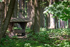 _DSC1949.jpg (Burghart-Alexander) Tags: orte deutschland pflanze poing wildpark tiere bäumeundsträucher europe bayern bundesland umwelt