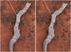 Prarie Driftwood (turbguy - pro) Tags: 3d stereo crosseye
