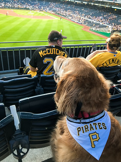 20/52  George at the Pirates Pup Night