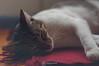 Lolita (KitosRD) Tags: gata mascota pet cat kitty nikon nikond90 50mmf18 segovia