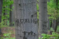 Ботанічний сад імені Гришка Буковий гай InterNetri  Ukraine 104