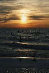 earth day 2018. (reilynsanderson) Tags: michigan midwest ocean lake lakemichigan water beach sunset sun bifds birds seagull seagulls