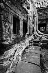 Nature reclaims (Johnbasil1) Tags: imposing majestic contrast mono nature reclaim ancient ruins temple cambodia angkor taprohm