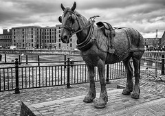 Liverpool Carters Working Horse Monument (Geoff France) Tags: bronze statue mono monochrome blackandwhite monument liverpool