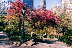 The choice is yours! (RomanK Photography) Tags: centralpark landscape manhattan nyc newyorkcity nature sonyalpha spring trees