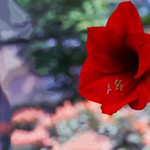 Toronto Ontario ~ Canada ~ Allan Gardens ~ Landmark Site ~ Historical Allan Gardens Conservatory ~ thumbnail