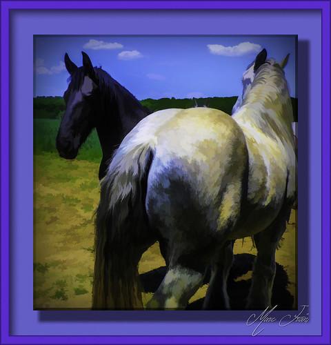 Puttelange 2018 05 - 026 lr-Tpz hd chevaux
