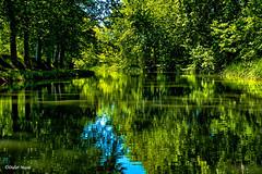 Le canal du Midi (n°2) (didier95) Tags: canaldumidi beziers herault occitanie canal arbre paysage reflet vert