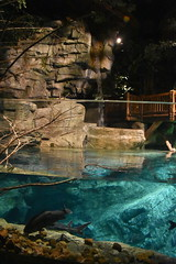 Indoor Waterfall (Adventurer Dustin Holmes) Tags: 2018 wondersofwildlife waterfall indoorwaterfall freshwateraquarium water aquarium fish springfieldmo springfieldmissouri ozarks greenecounty missouri