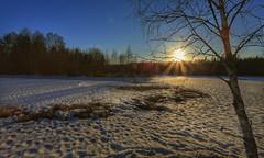Sunset (Roman_P2013) Tags: degernes sunset sun winter nice snow landscape beautiful super tree norway norge