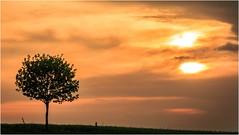 Der Tag war schön (linke64) Tags: thüringen deutschland germany natur landschaft himmel sonnenuntergang wolken baum