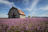 Barn with Henbit Redux (Notley Hawkins) Tags: notley notleyhawkins 10thavenue httpwwwnotleyhawkinscom missouriphotography notleyhawkinsphotography ruralphotography dof depthoffield barn farm architecture rural bucolic rurallandscape purple purpleblooms purpleflowers henbit weed henbitblooms weeds clouds sky boonecounty boonecountymissouri missouri april spring 2014 riverbottoms missouririverbottoms