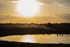 IMG_3032 (tregnier) Tags: namibia roadtrip africa travel desert animals sossusvlei leopard cheetah lion solitaire trip