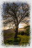 Un Arbre , un ami (jamesreed68) Tags: hartmannswiller 68 alsace grandest nature soleil canon eos 600d hautrhin france