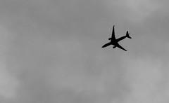 Silouhette of Qatar airways over my house (|Sarah|) Tags: boeing shadow aircraft blackwhite airplane plane airway bnw aviation highcontrast contrast silouhette blackandwhite qatar clouds
